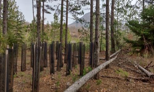 Plantez vos arbres en quelques clics