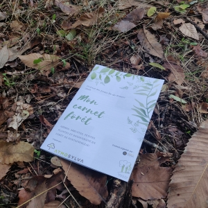 Take your forest notebook with you