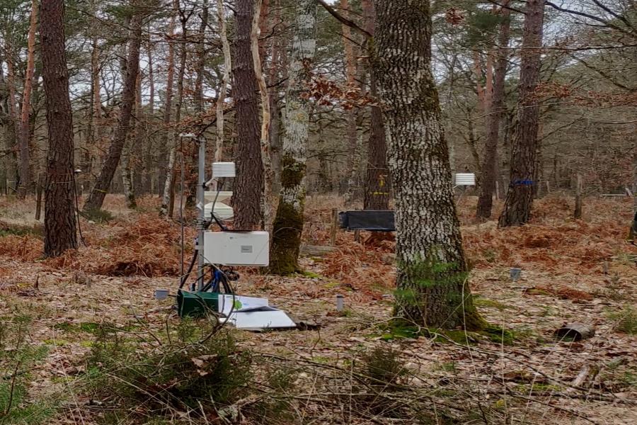 Expérimentation forestière