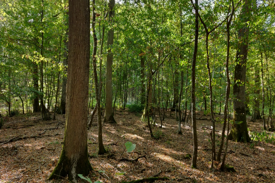 Retrouvez d'autres informations sur notre journal des forêts
