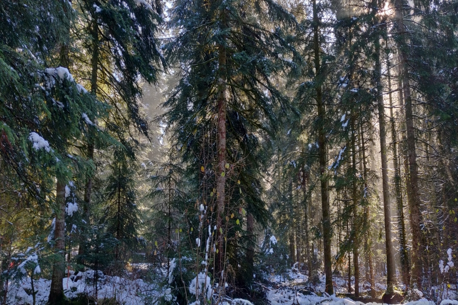 Forêts multifonctionnelles - Couvert continu